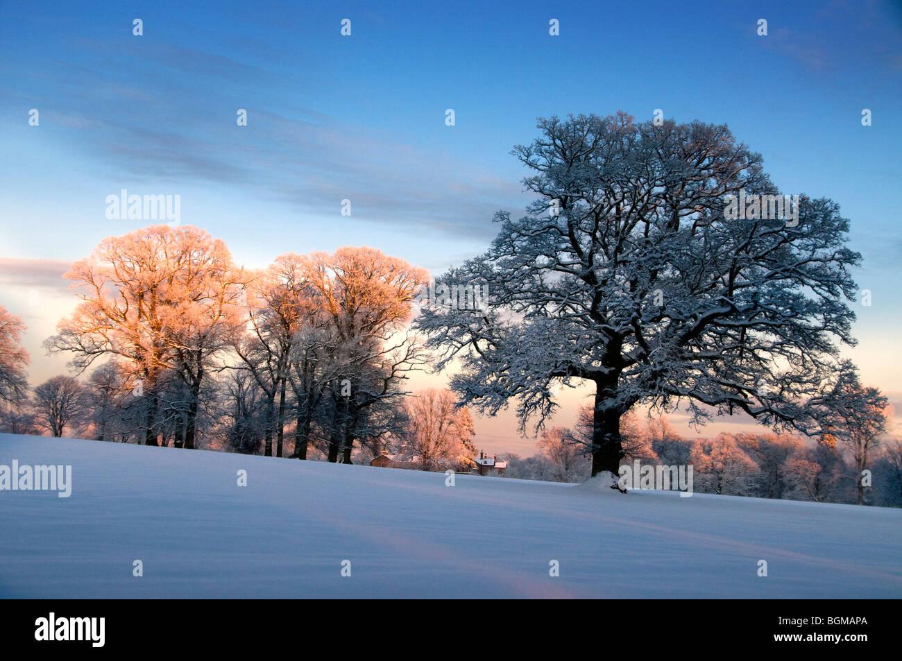 Winter-Wald-Szene Stockfoto