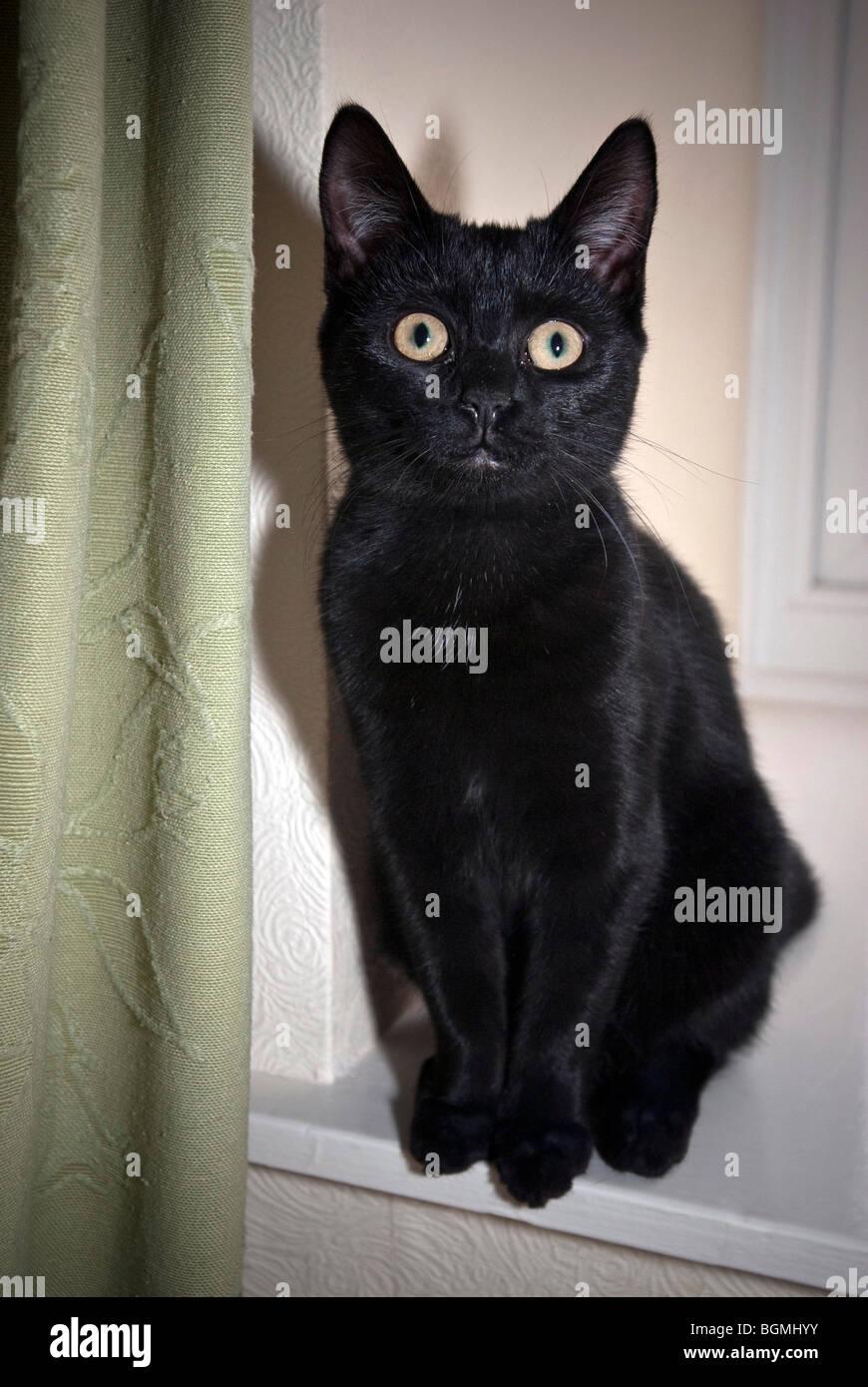 Schwarze Katze in Katze iglu Stockfotografie Alamy