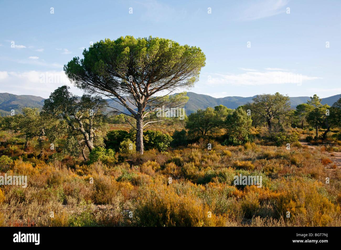 Massif des Maures, Var, Provence, Frankreich. Stockbild