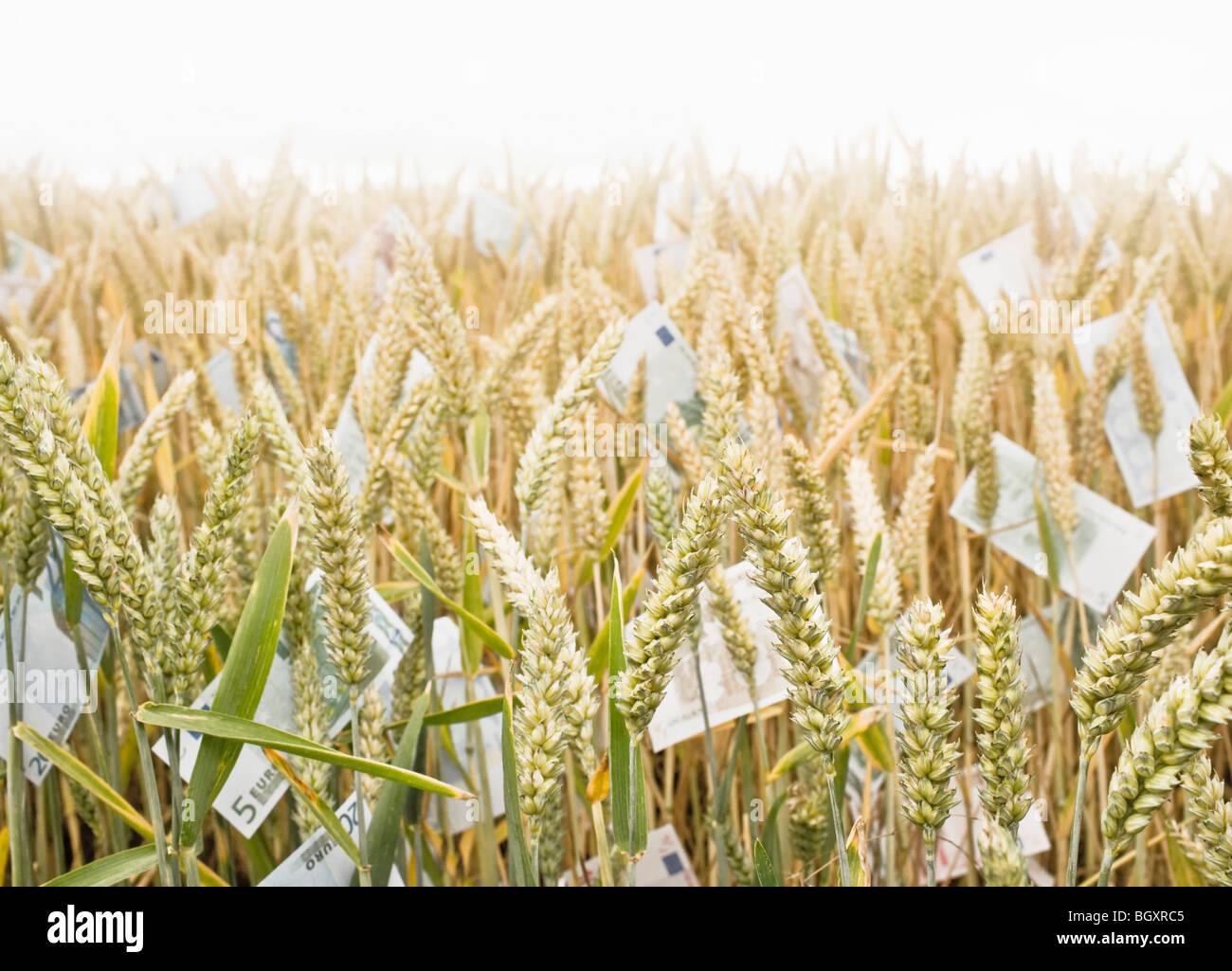 Weizenfeld mit Geld Stockbild