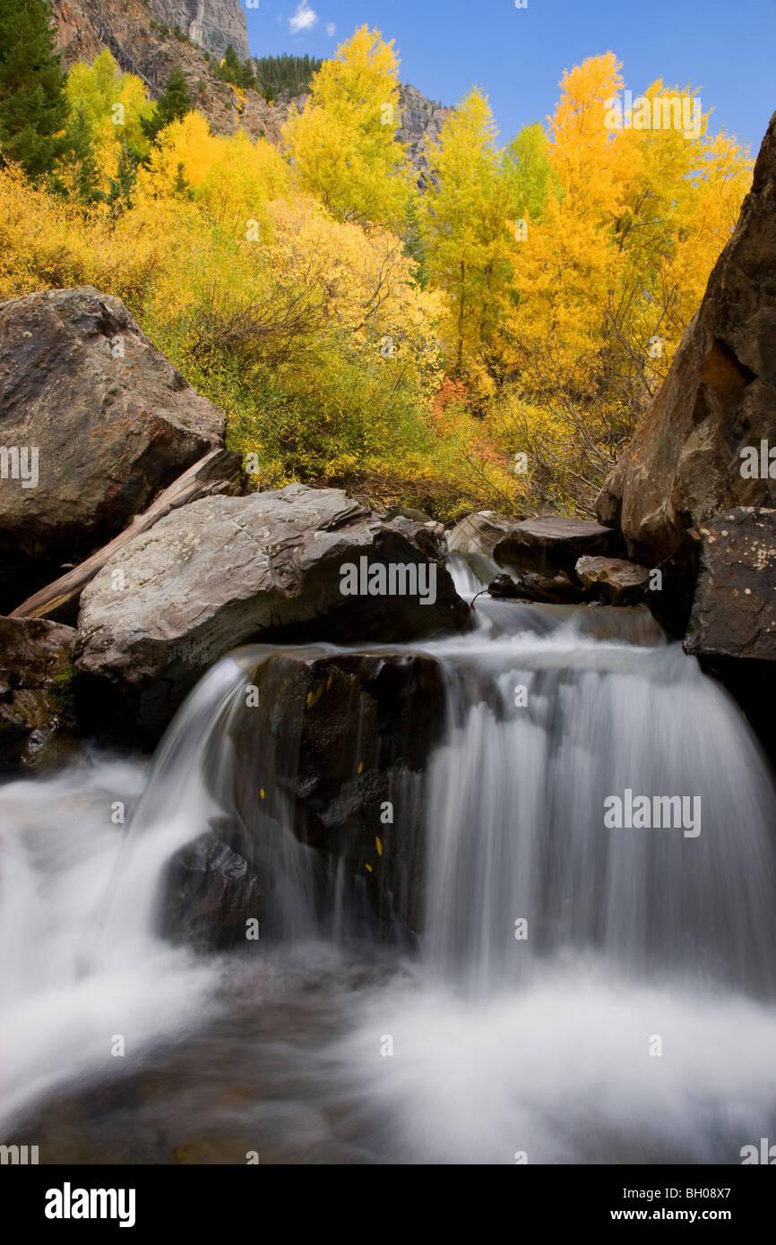 Herbstfarben entlang Bear Creek in den San Juan Mountains in der Nähe von Ouray, Colorado. Stockbild