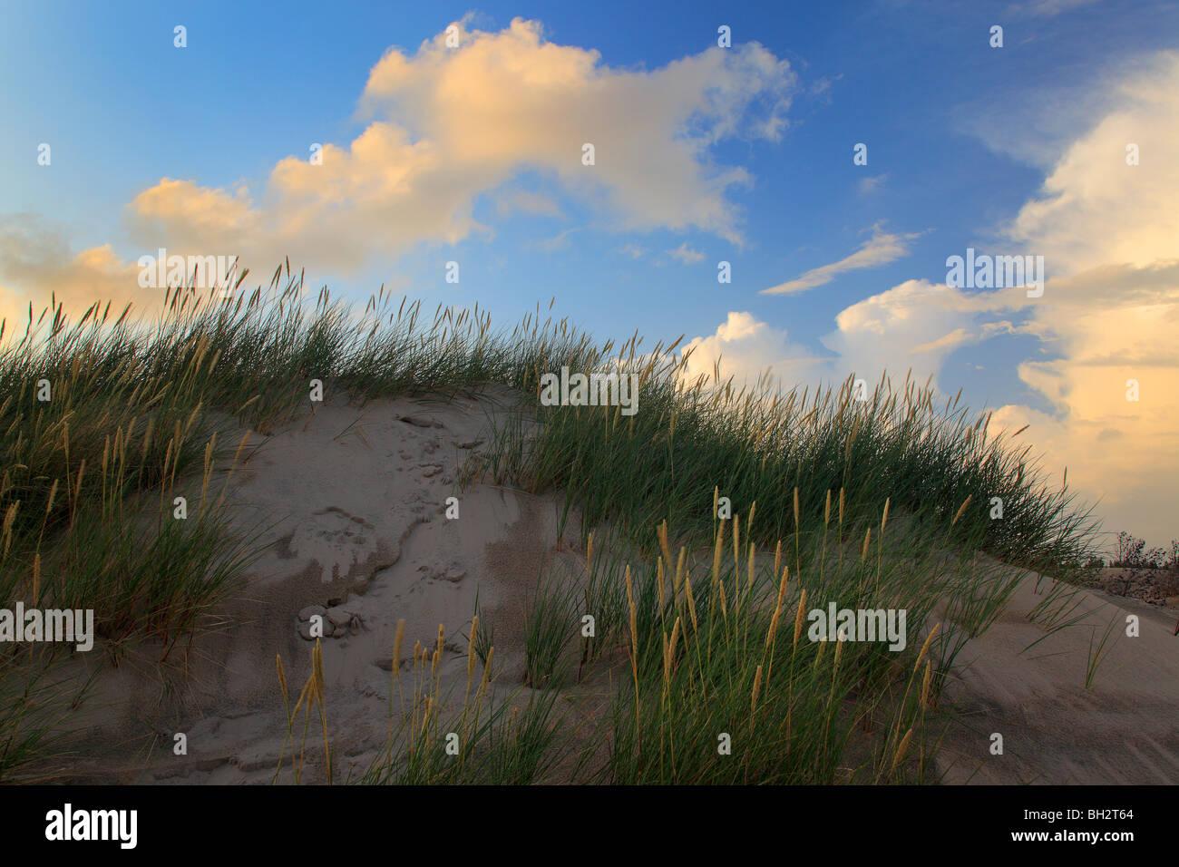 Raabjerg Mile ist eine Migration von Küstendüne zwischen Skagen und Frederikshavn, Dänemark. Stockbild