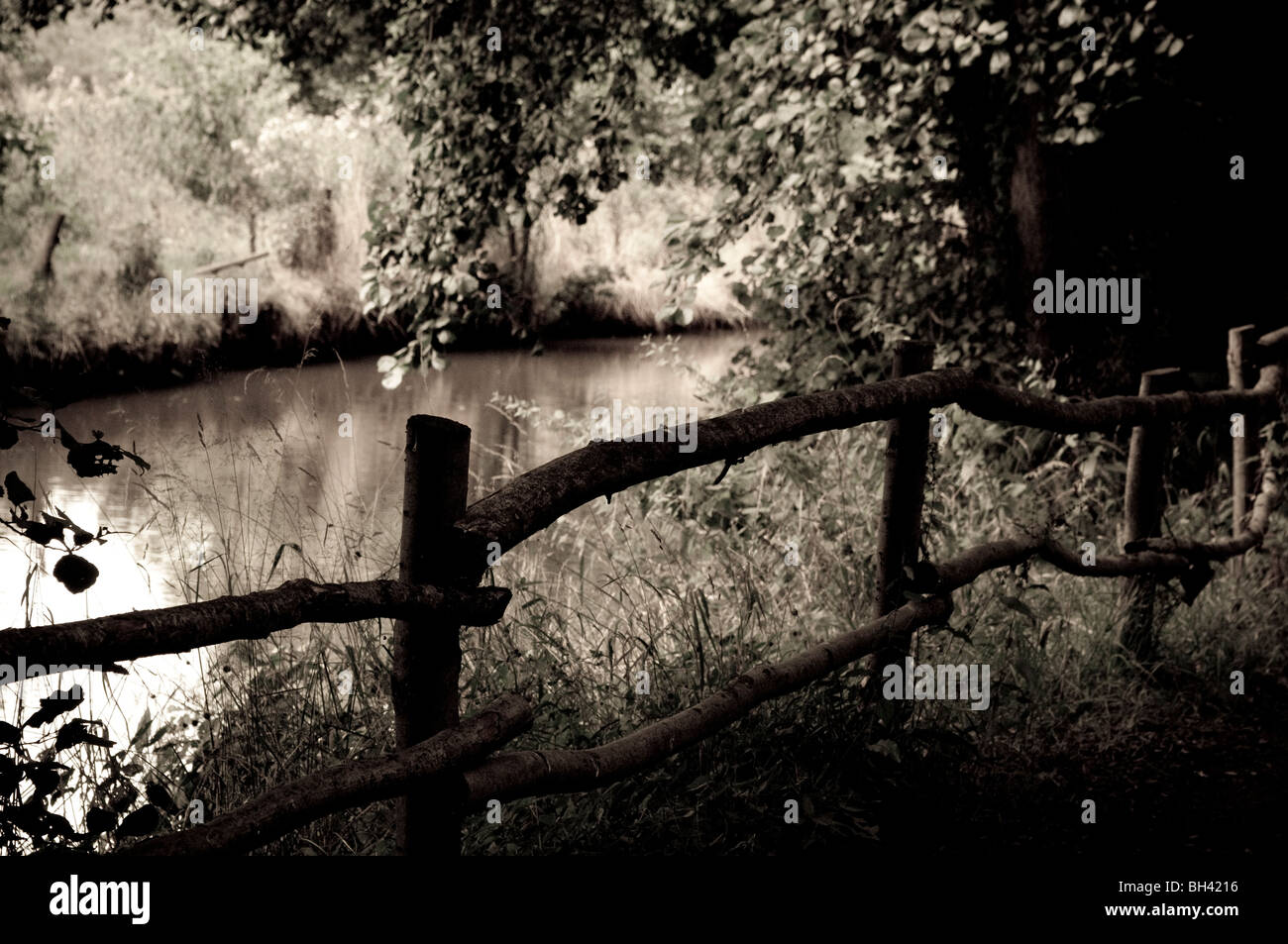Zauberwald, Groombridge, Kent, UK Stockbild