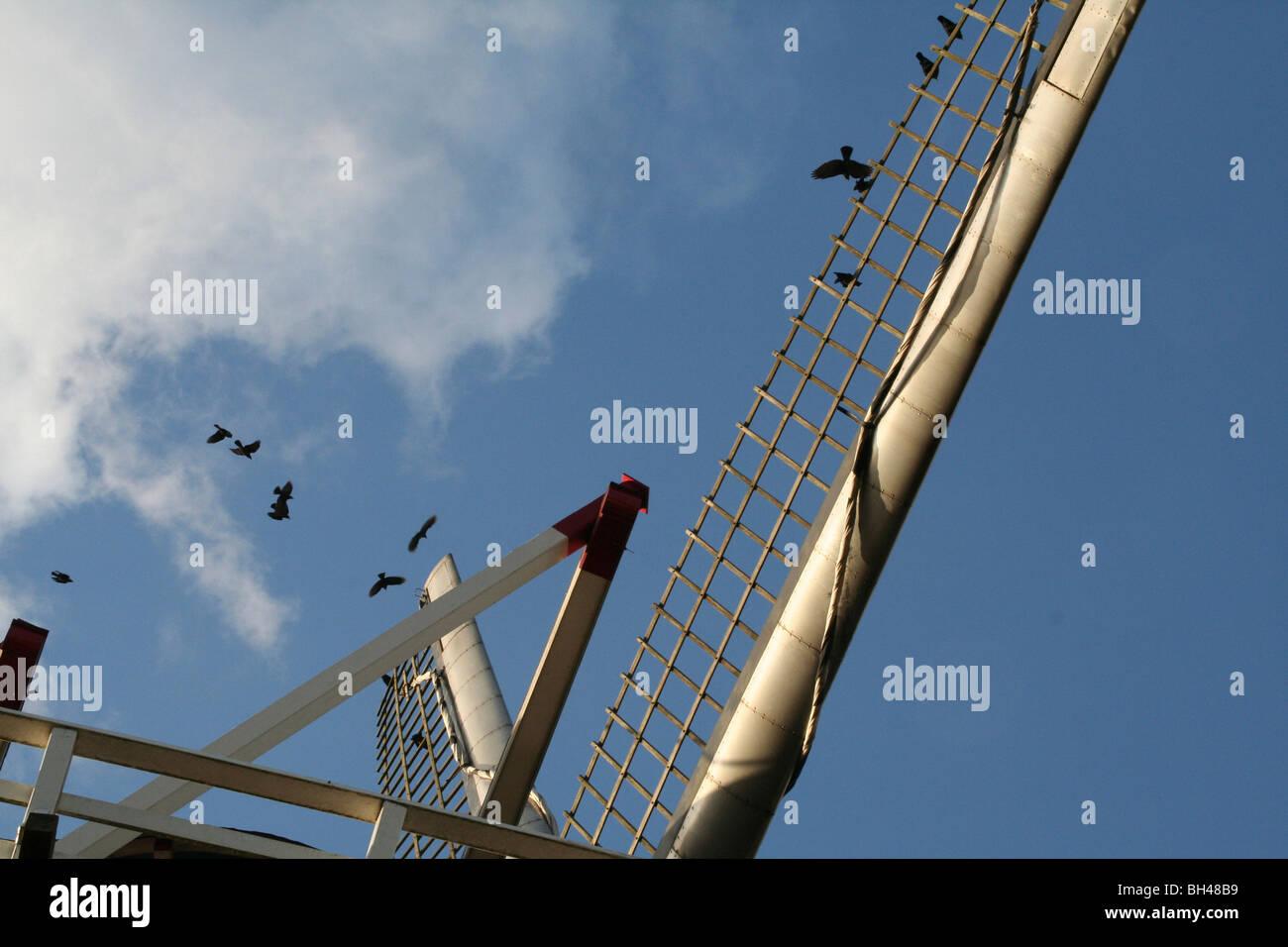 Alte Windmühle in Ravenste mit fliegenden Krähen. Stockbild
