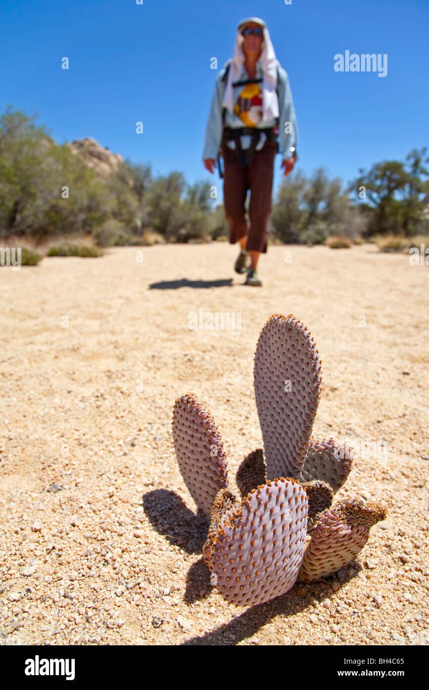 Eine Frau Wanderungen vorbei an einen Kaktus Strauch in Joshua Tree Nationalpark, Kalifornien. Stockbild