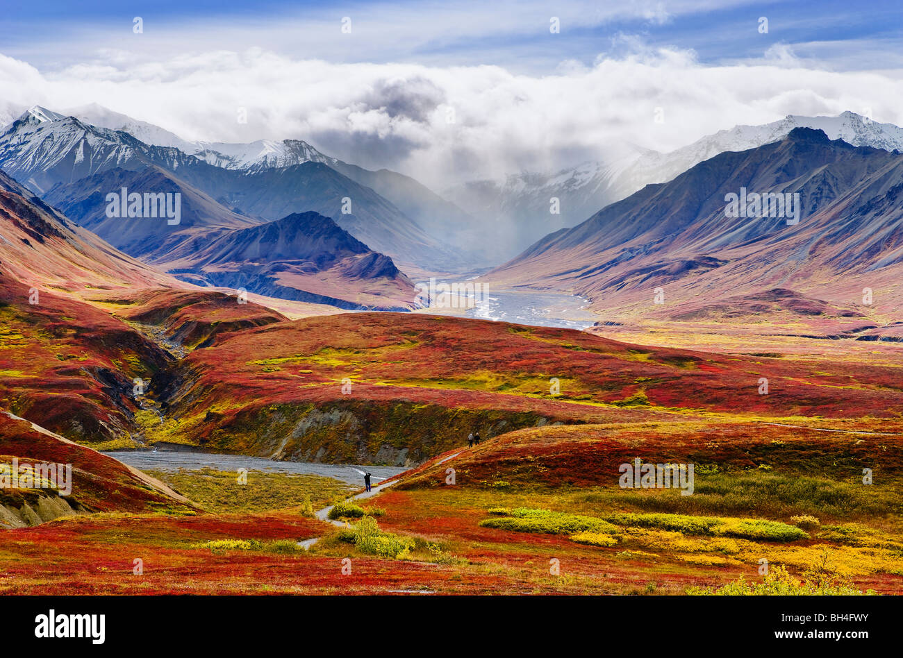 Herbstfarben und Alaska Range, Denali-Nationalpark, Alaska Stockbild