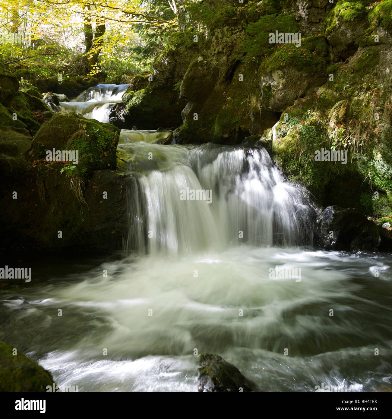 Wald-Bach und Wasserfall im Sommer Stockbild
