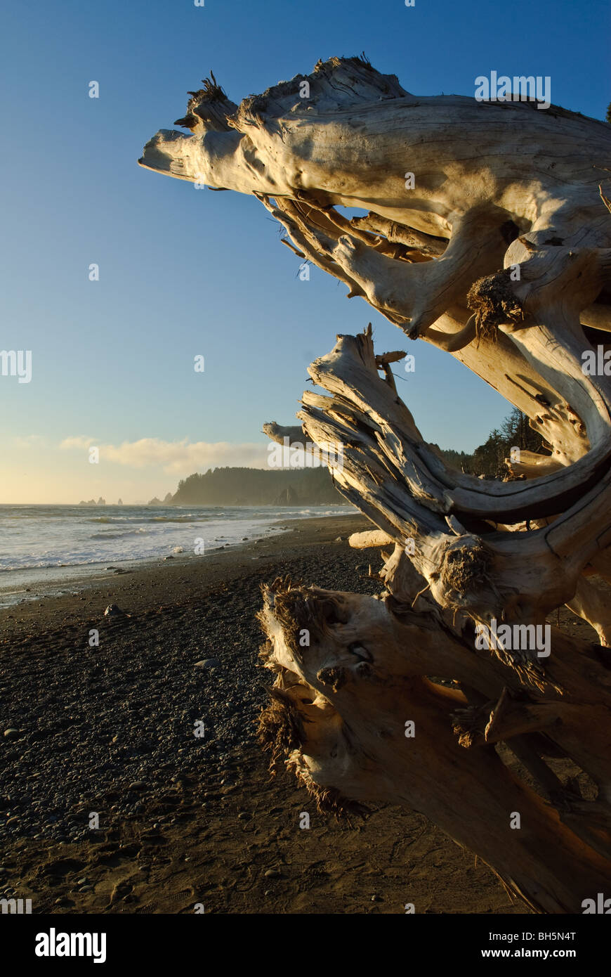 Strand von La Push, Olympic Peninsula in Washington State Stockfoto