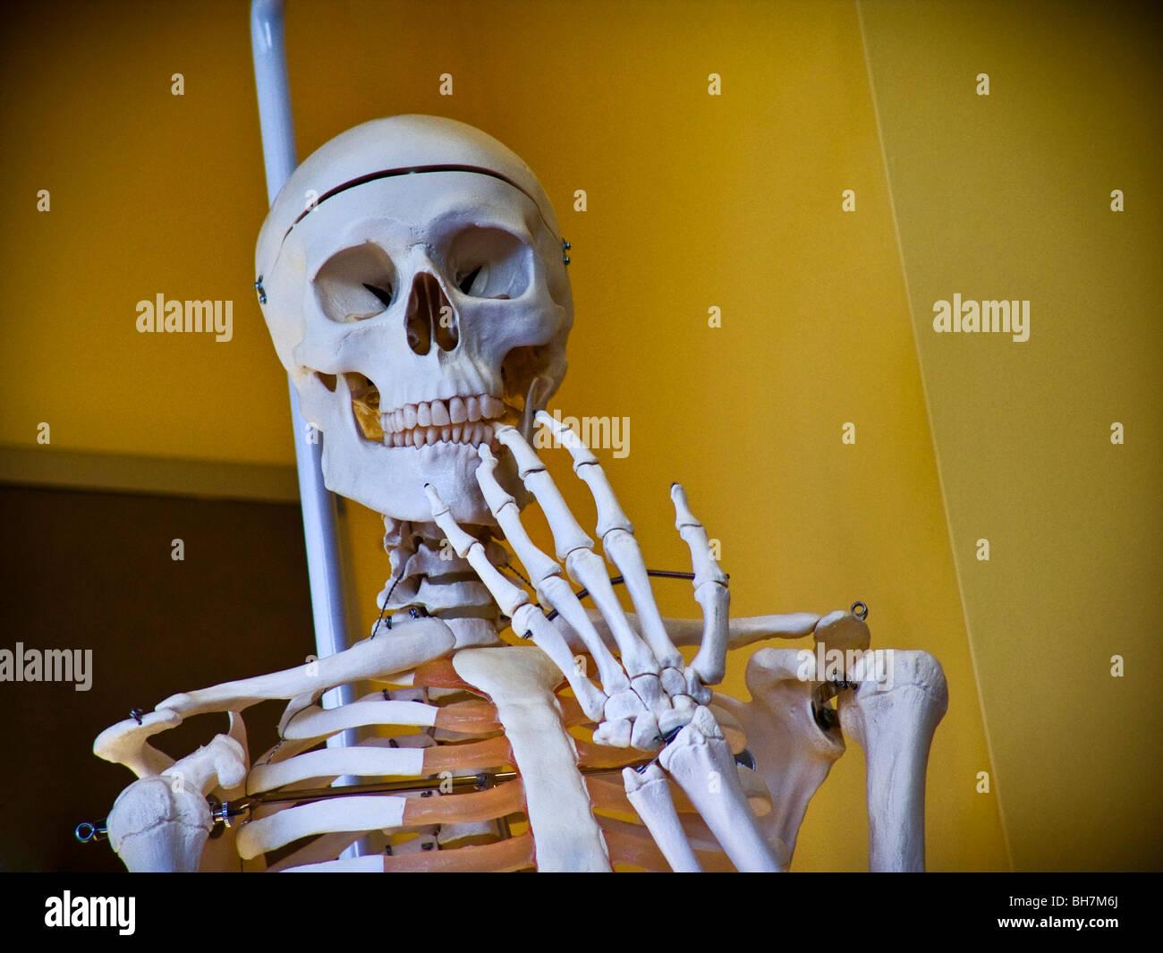 Menschliches Skelett in medizinischen Schule studieren Situation mit ...
