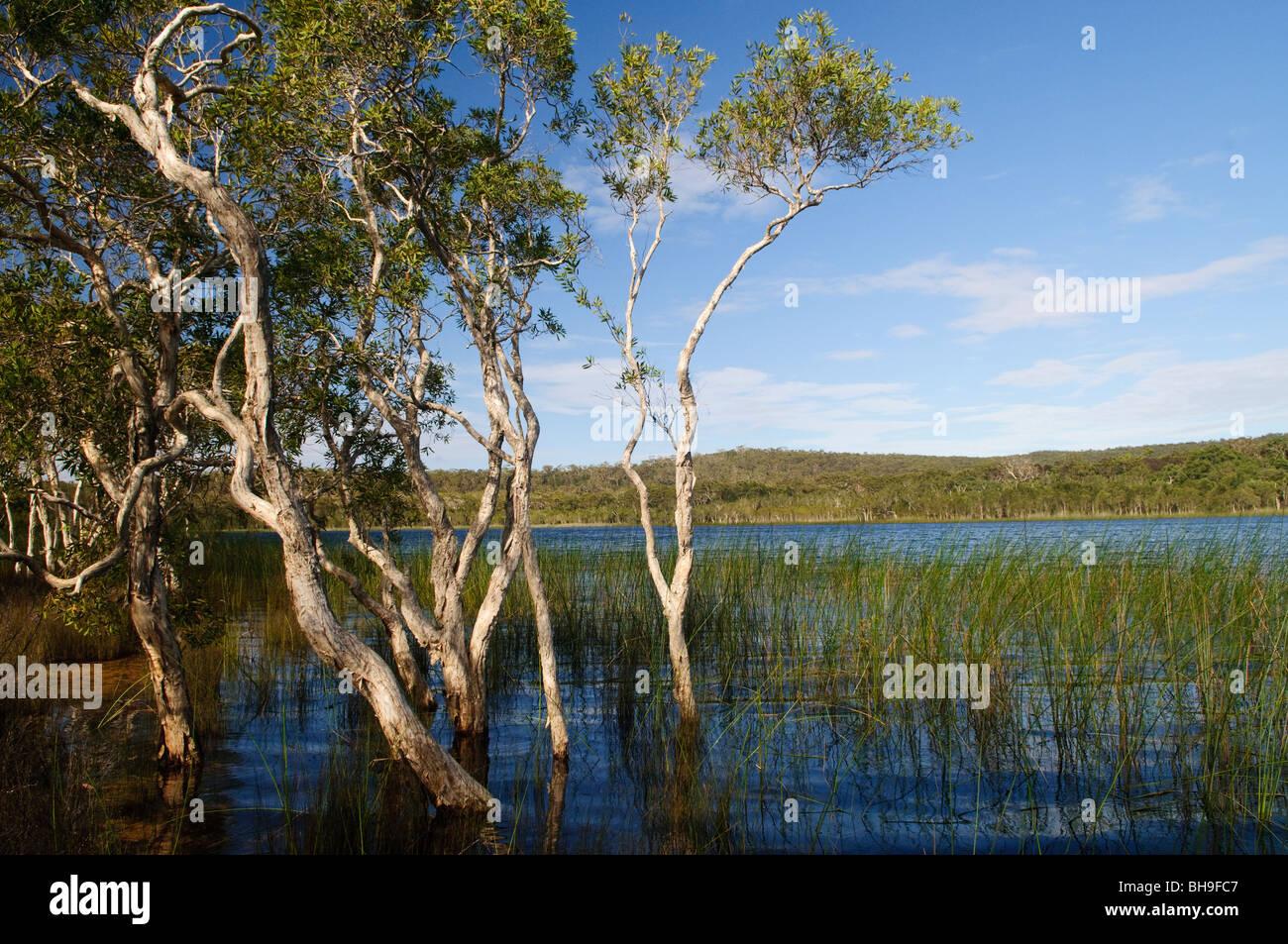 Brown-Lake ist ein See auf North Stradbroke Island in Queensland ...