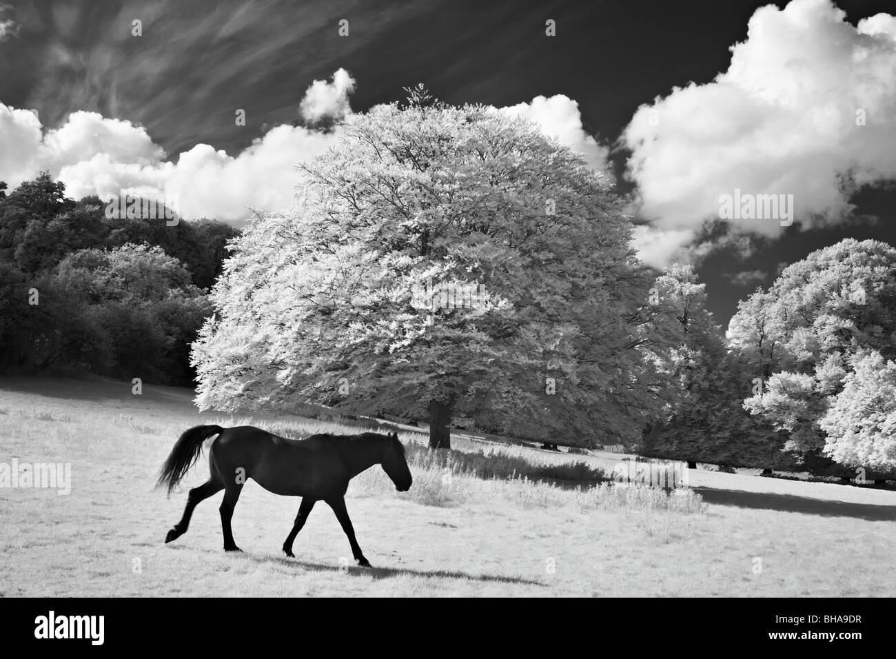 Pferde bei Minterne Magna, Dorset, England, UK Stockbild