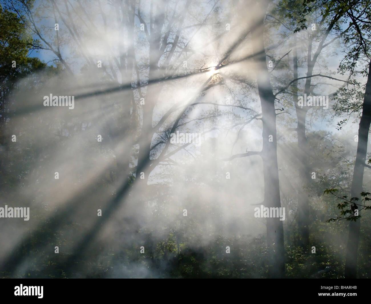 Rauch von einem Waldbrand steigt durch die Bäume in einem Wald. Sonnenlicht filtert durch den Dunst. Stockfoto
