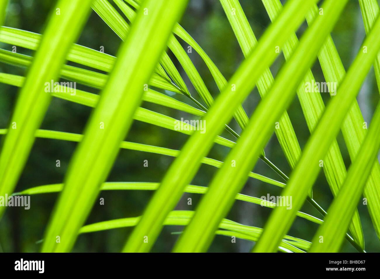 Palm Details, Calakmul Biosphären-Reservat, Mexiko Stockbild