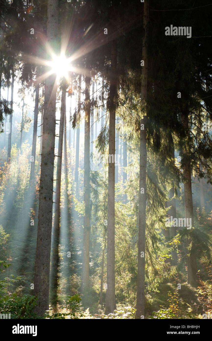 Strahlen des Sonnenlichts im Wald Stockbild