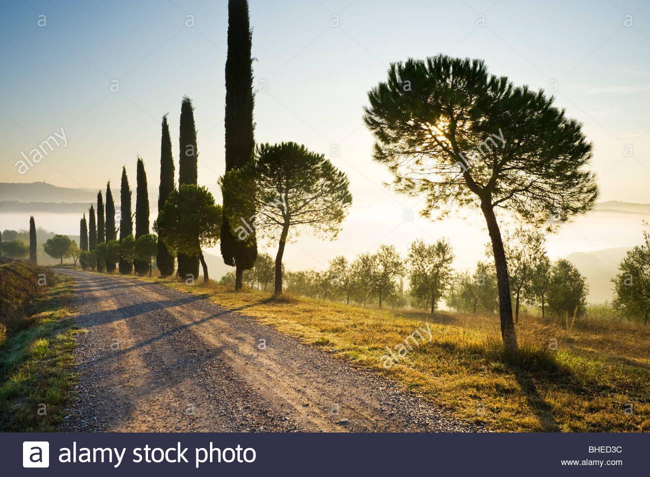 Strecke gesäumt von Zypressen, in der Nähe von San Quirico D'Orcia Val D'Orcia, Toskana, Italien. Stockbild