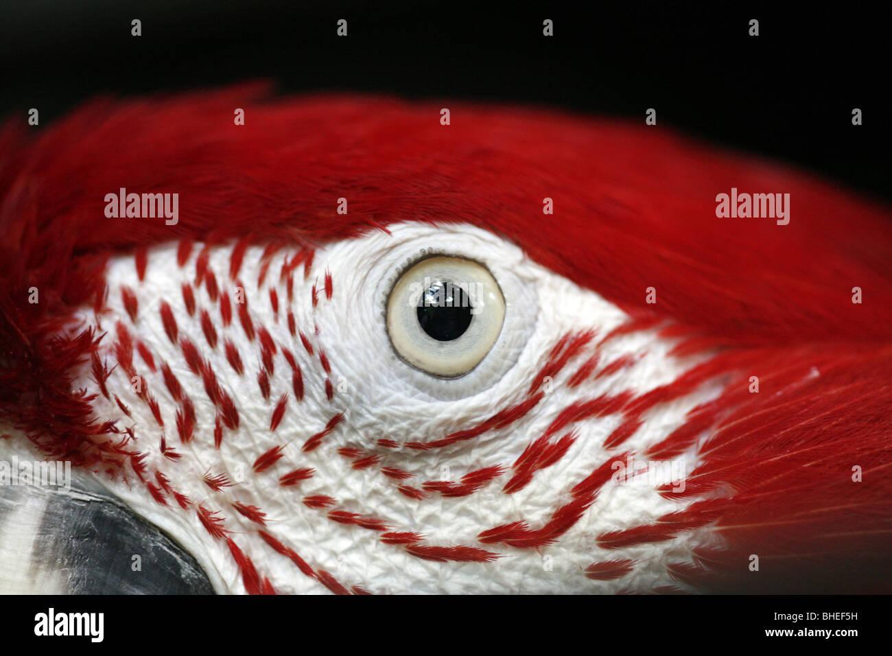 Parrots For Eyes Stockfotos & Parrots For Eyes Bilder - Alamy
