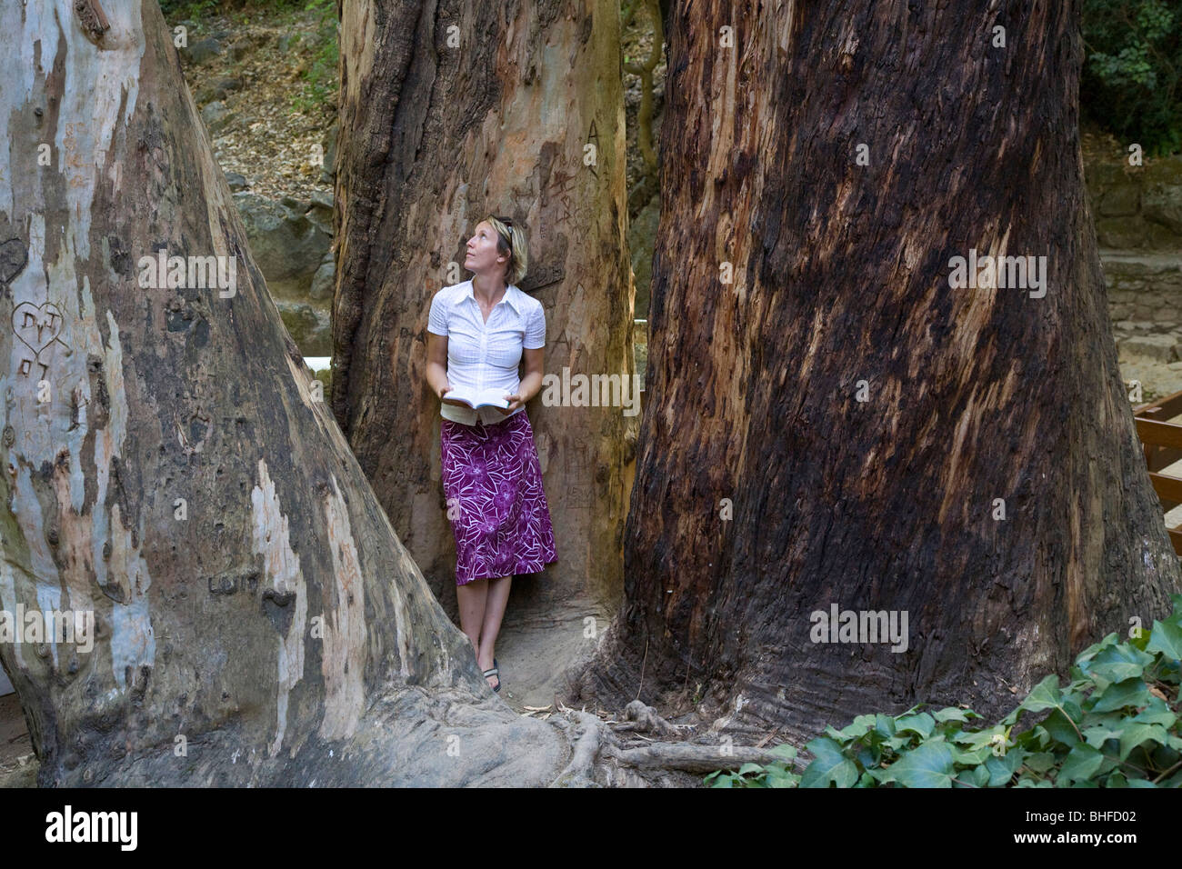 Junge Frauen ein Buch neben drei riesige Bäume in Caldas de Monchique Park, resort Thermalquellen und Wellness, Stockbild