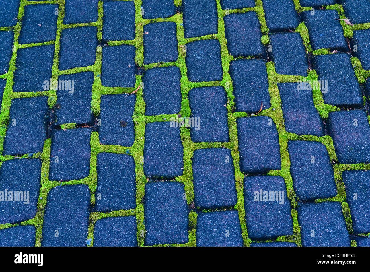 Moos zwischen Backsteinen auf einem Bürgersteig City, Seattle, WA, USA. Stockfoto