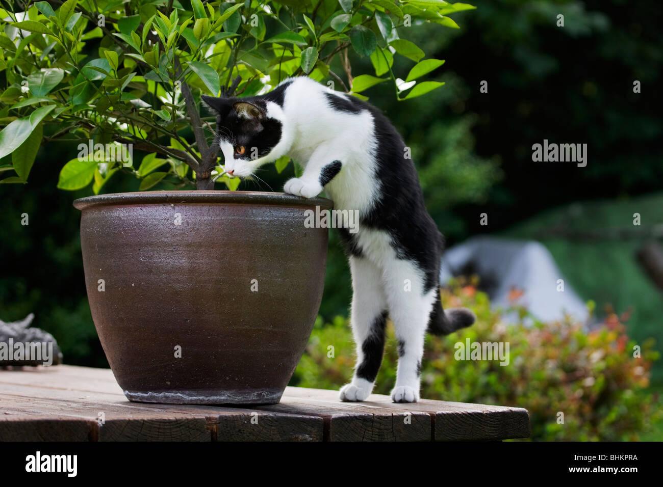 Blumenkubel Stockfotos Und Bilder Kaufen Alamy