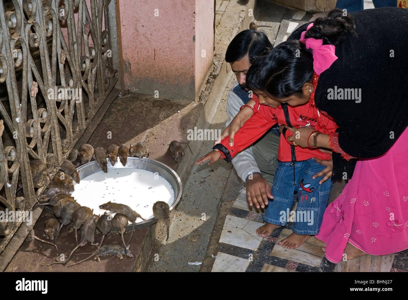 Indische Familie verehren die Heiligen Ratten. Karni Mata Tempel. Deshnok (in der Nähe von Bikaner). Rajasthan. Stockbild
