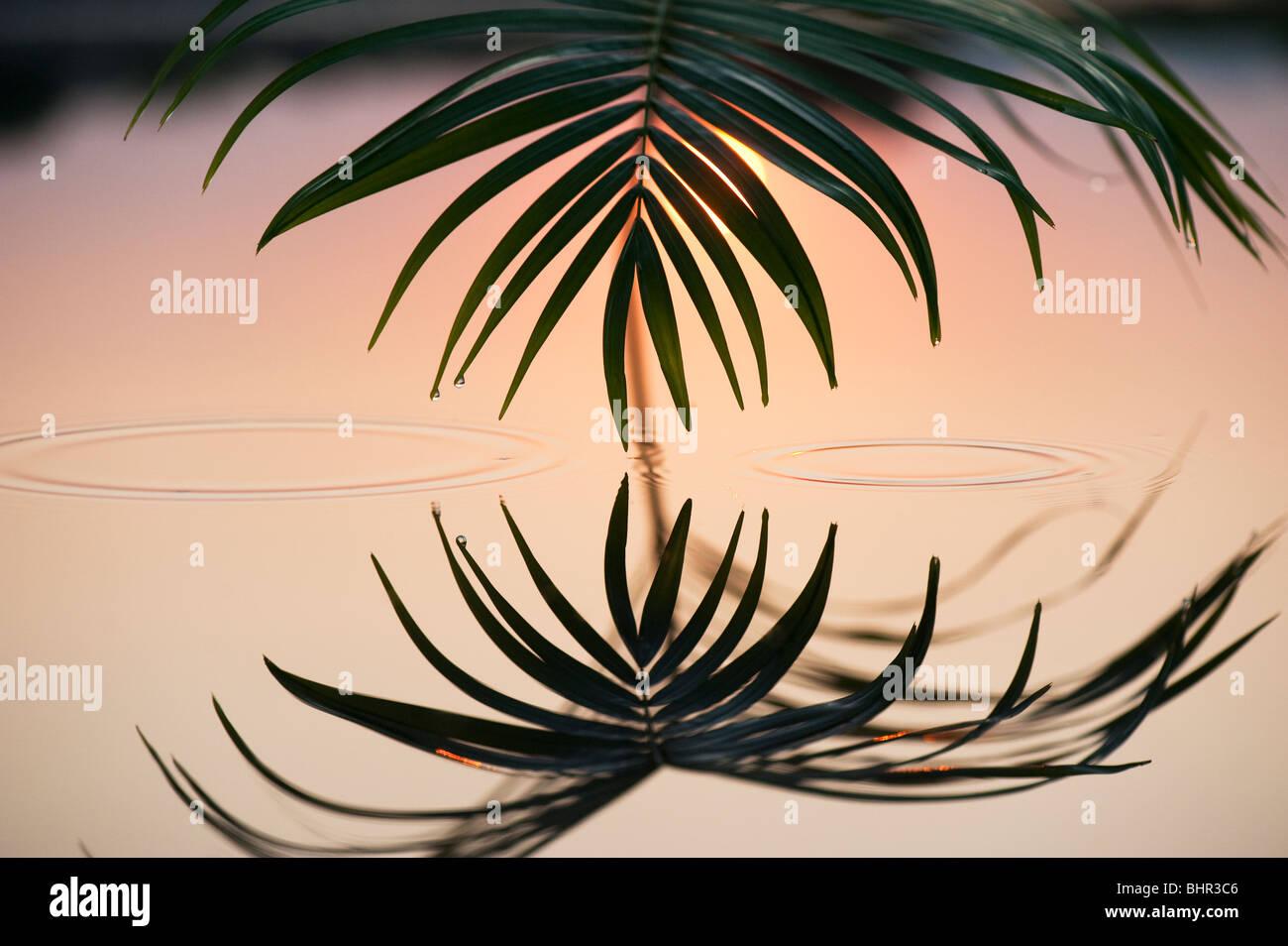 Palmblatt reflektiert in einem noch Pool bei Sonnenaufgang in Indien Stockfoto