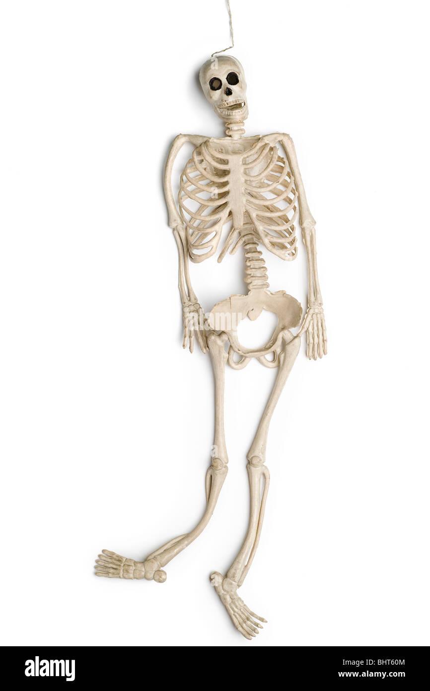 ein Kautschuk-Spielzeug-Skelett auf weiß Stockbild