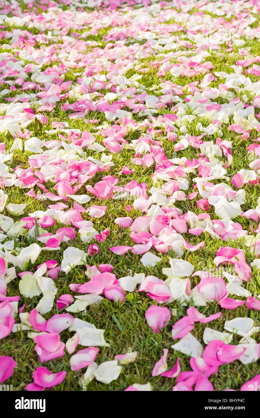 Detail Der Hochzeitsblumen Auf Bogen Kranz Stockfoto Bild 28269596