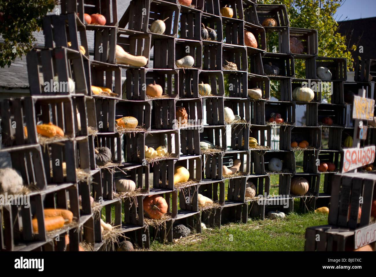 Kürbis für den Verkauf in Holzkisten angezeigt. Stockbild
