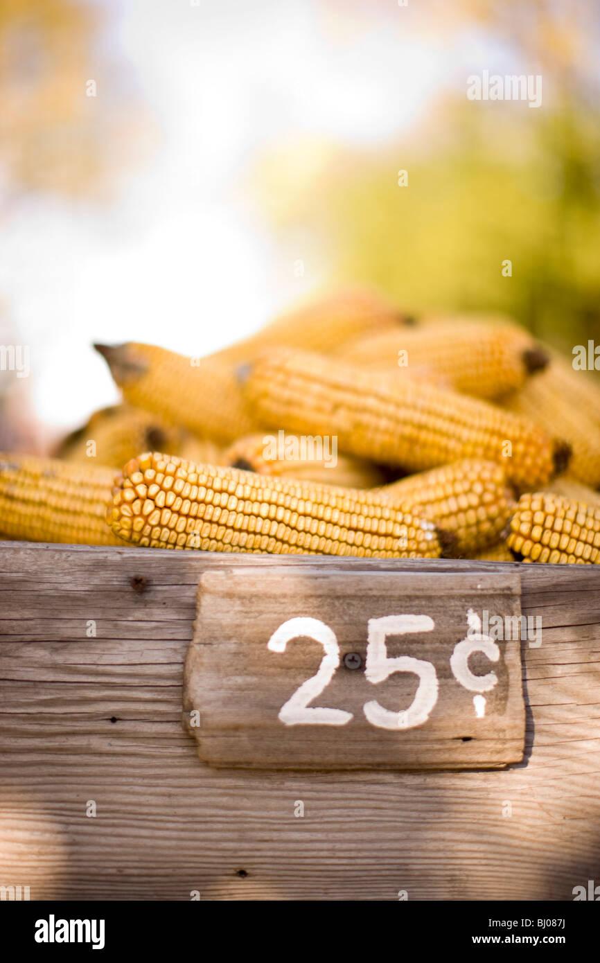 Mais zu verkaufen. Stockbild