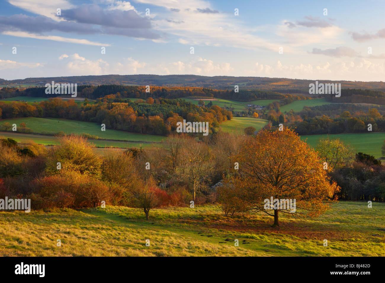 Blick vom Newlands Ecke blicken in Richtung Albury, North Downs Way Surrey. Das warme Licht der Sonne die herbstlichen Stockbild