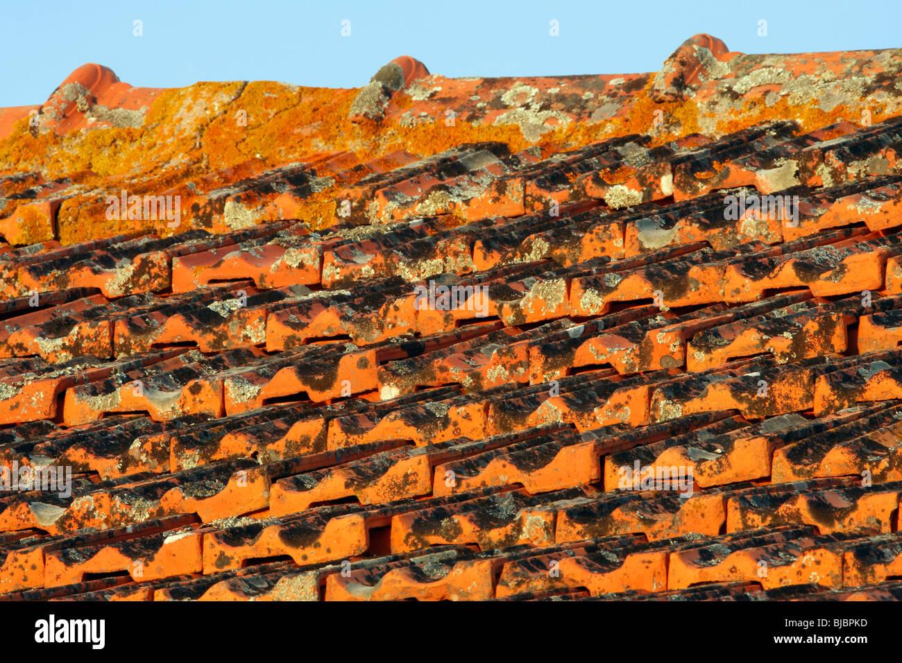 lichens stockfotos lichens bilder alamy. Black Bedroom Furniture Sets. Home Design Ideas