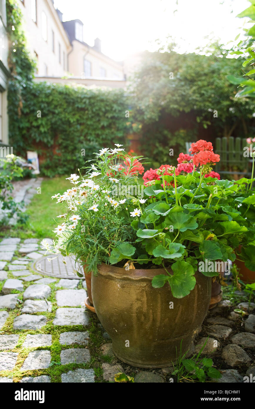 geraniums stockfotos geraniums bilder alamy. Black Bedroom Furniture Sets. Home Design Ideas