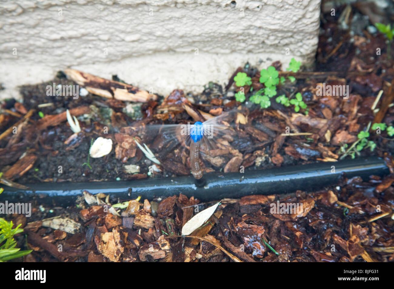 Mikro Sprühkopf in Mulch. Verwendet in trockenen Klimas als eine alternative Bewässerungstechnik spart Stockbild