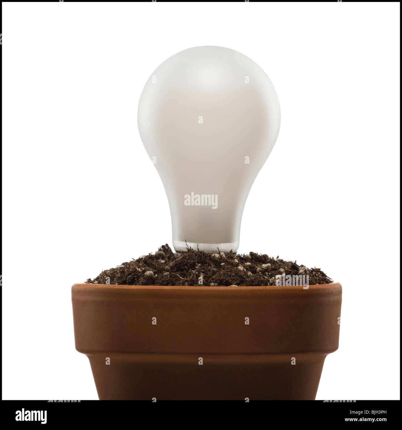 Glühbirne in einen Topf mit Erde gepflanzt Stockbild