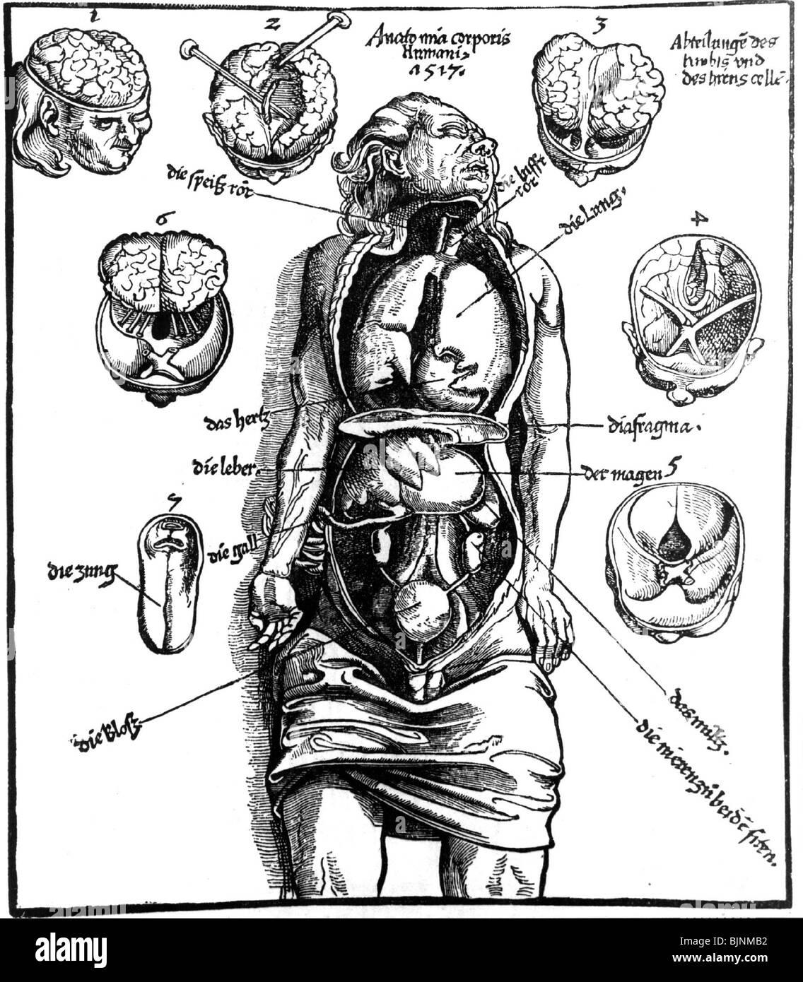 Medizin, menschlichen inneren Organen, Illustration aus \