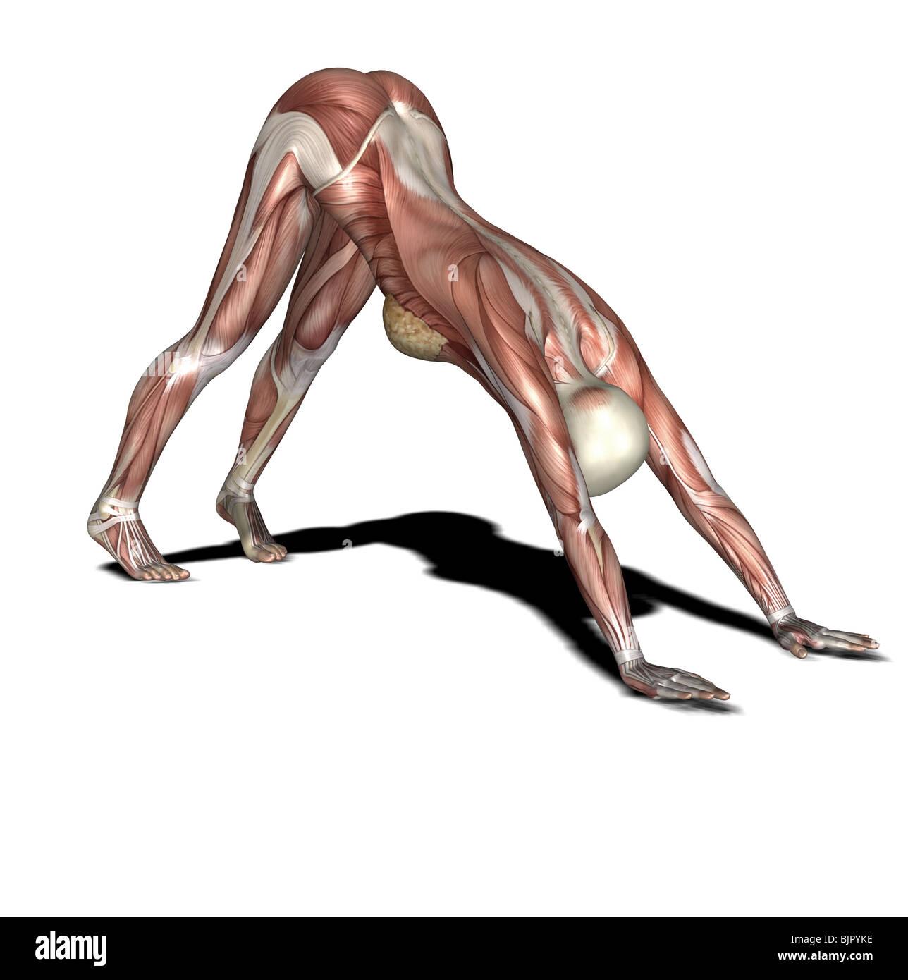 Yoga-Praxis unten mit Blick auf Hund Stockbild