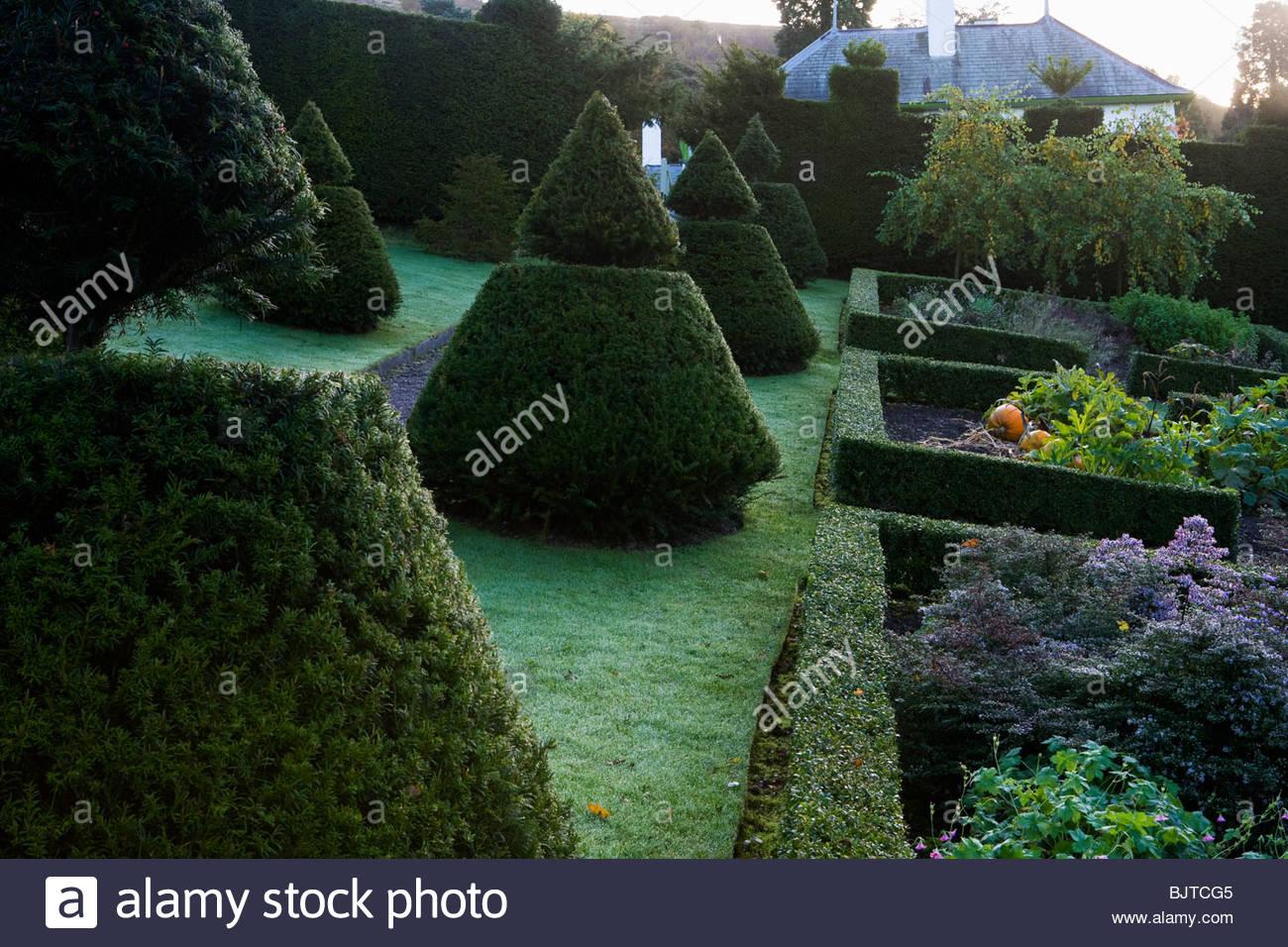 Perrycroft, Herefordshire. (Bogenschützen) Eibe topiary Garten in Hanglage Stockbild