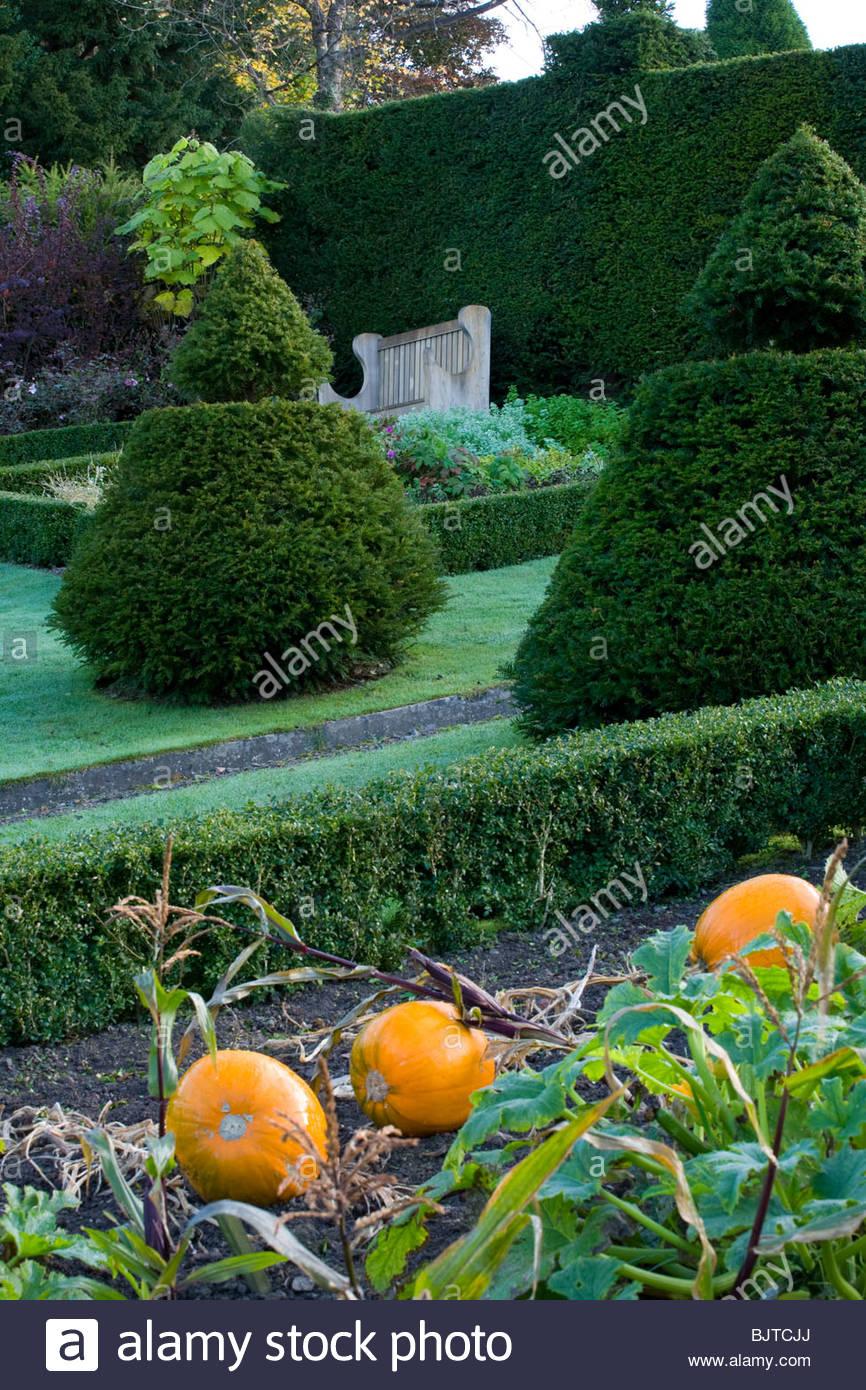 Perrycroft, Herefordshire. (Bogenschützen) schräge Eibe topiary Garten im Herbst Garten mit Kürbissen Stockbild
