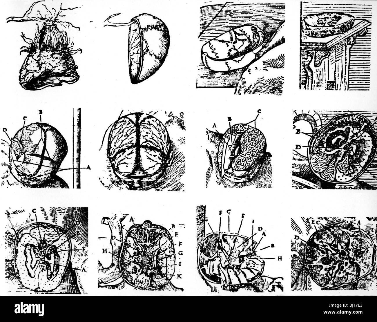 Nett Anatomie Eines Weichei Bilder - Anatomie Ideen - finotti.info