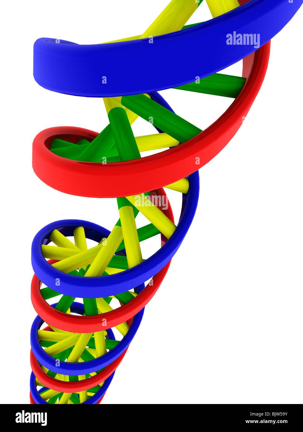 DNA-Doppelhelix-Modell Stockbild