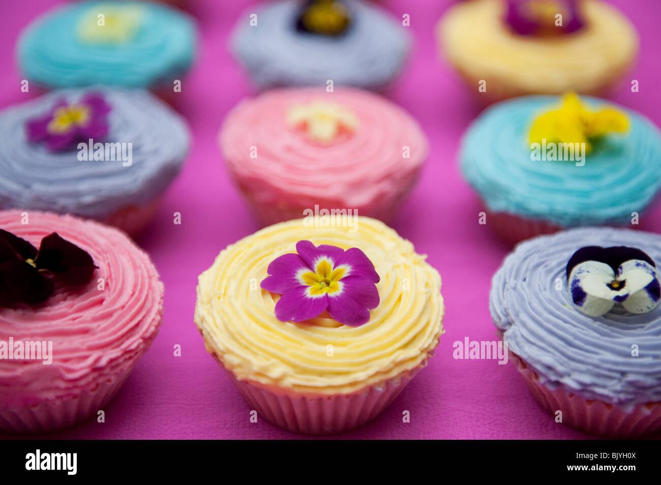 Bunte Cupcakes und essbare Frühlingsblumen Stockbild