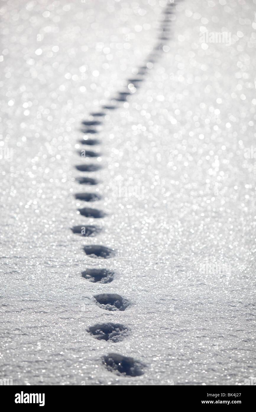 Katze-Spuren im Schnee Stockbild
