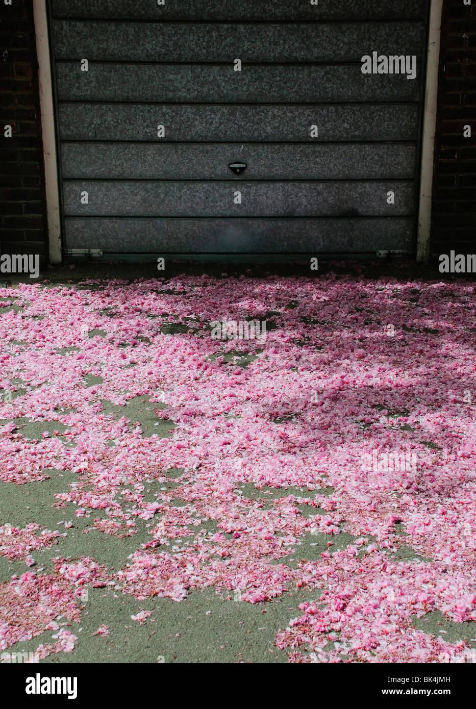 Streuung von gefallenen rosa Blüte auf Boden vor Metall Garagentor Stockbild