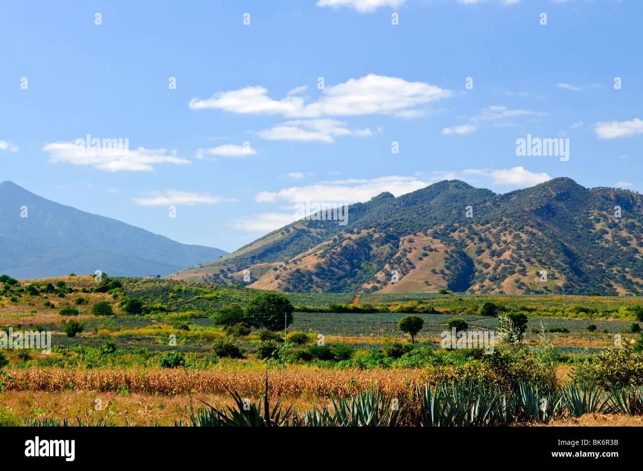 Landschaft mit Agave Kaktus Feldern in der Nähe von Tequila in Jalisco, Mexiko Stockbild