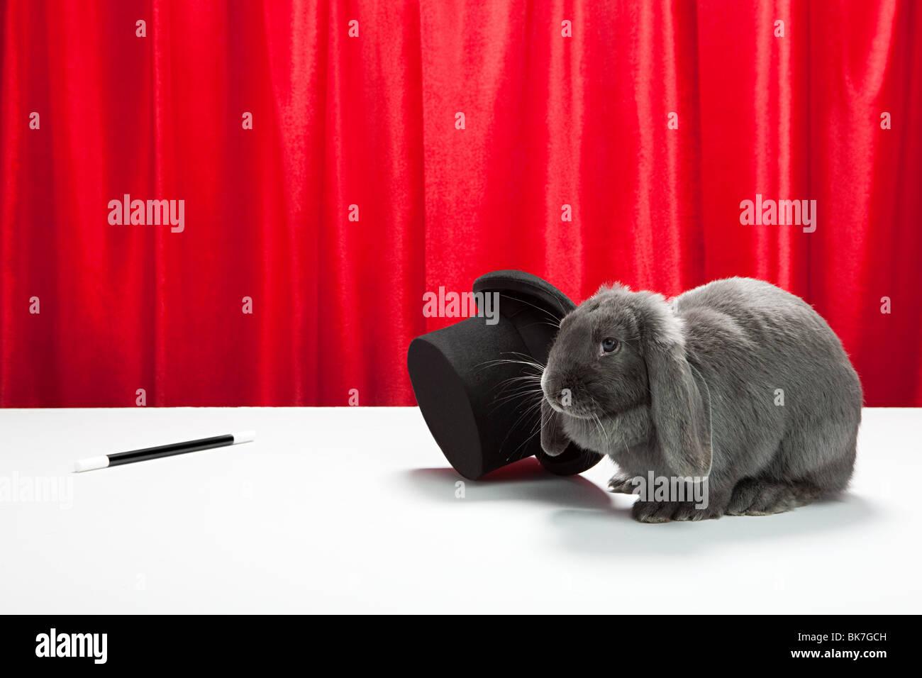 Kaninchen mit Zylinder und Zauberstab Stockbild