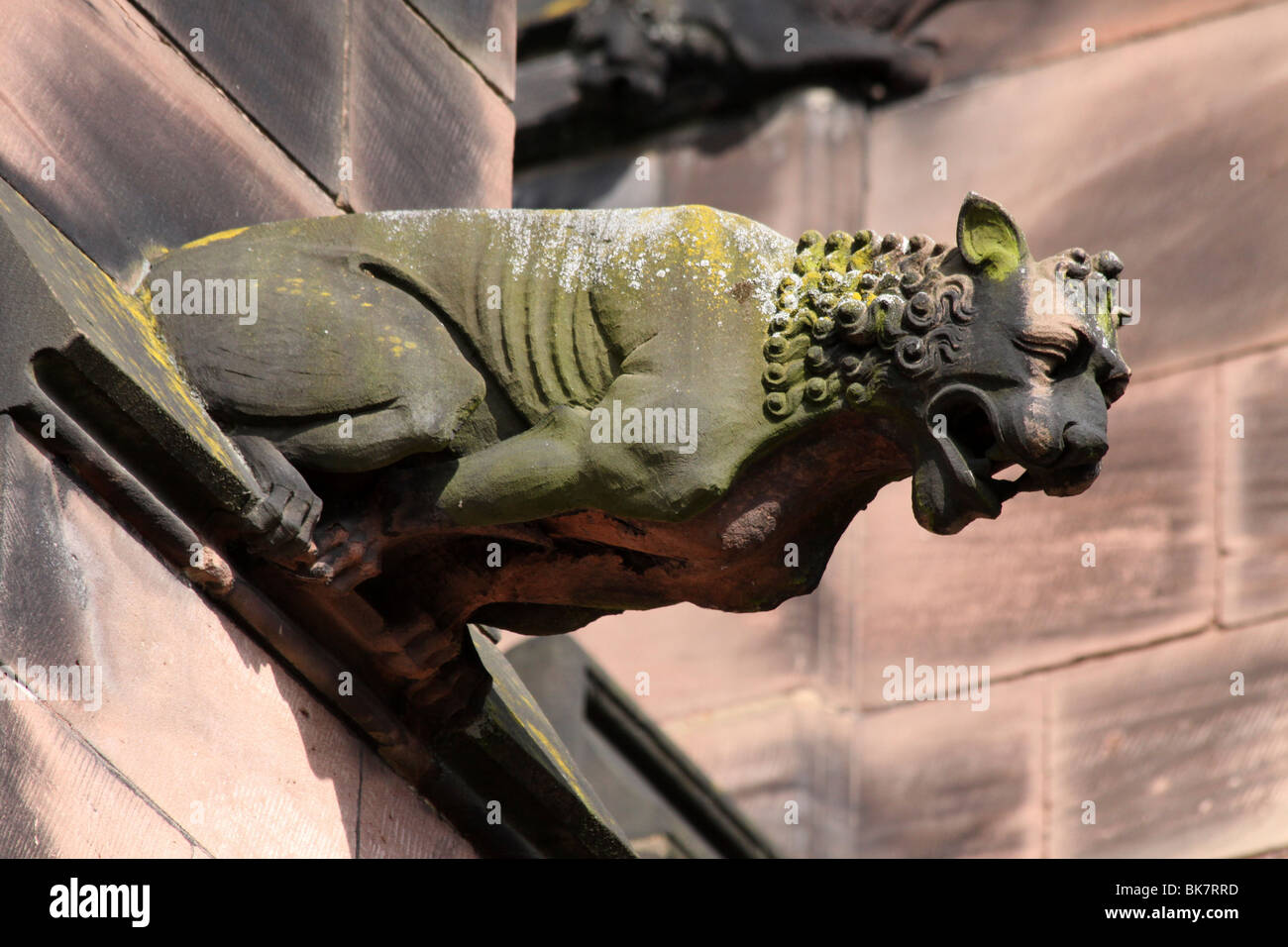 Löwe Wasserspeier in Chester Cathedral, Cheshire, UK Stockbild