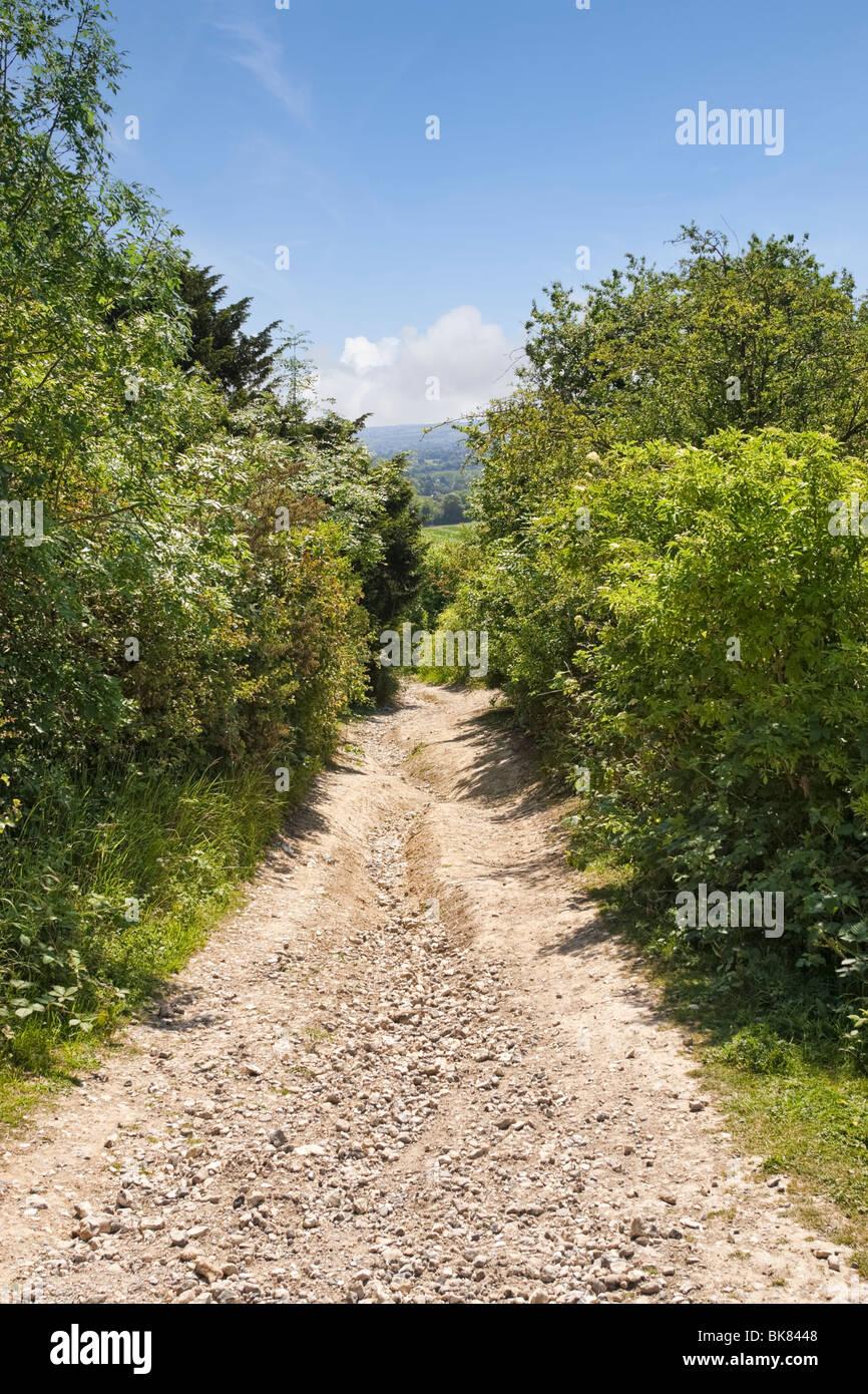 Maultierweg in den North Downs Way in der Nähe von Newlands Corner, Surrey, England, UK Stockbild