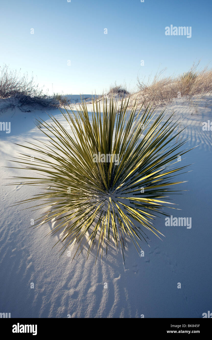 Yucca in Sand, weißen Sanddünen National Monument, New Mexico Stockbild