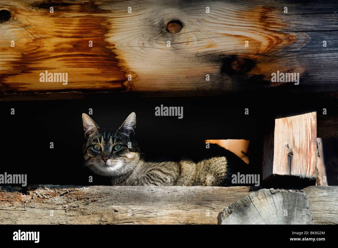 Katze hockend unter alten Dachstuhl Stockbild