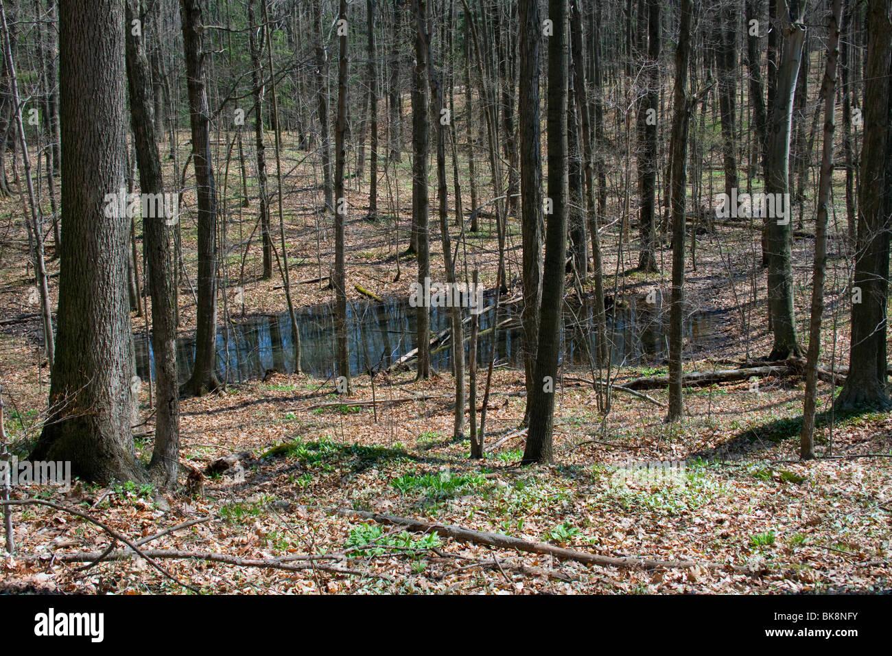 Vernal Teich östlichen Laubwald Frühjahr E USA von Dembinsky Foto Assoc Stockbild